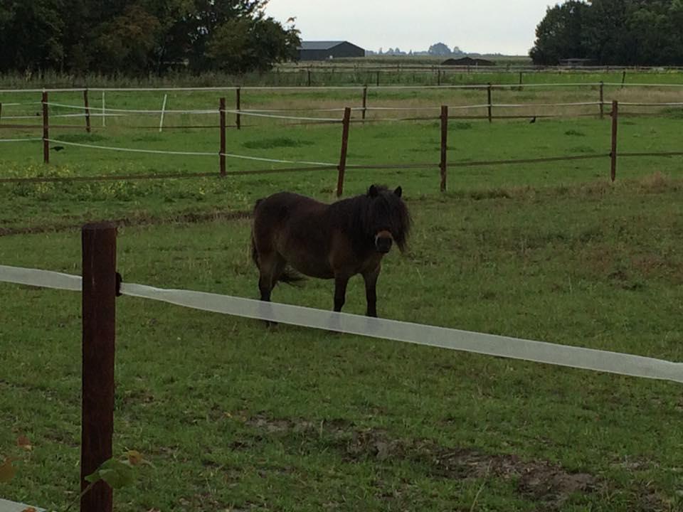 Paardencoaching Suus
